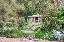 banksia-trees